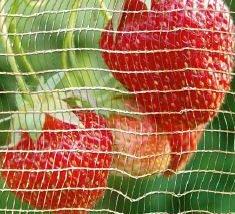 Sortiment für Erdbeeren