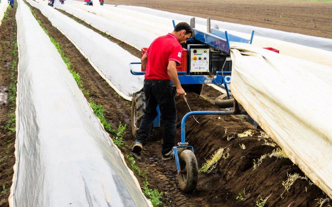 Bodenheizung für Spargel?