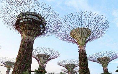 Bäume von Menschenhand
