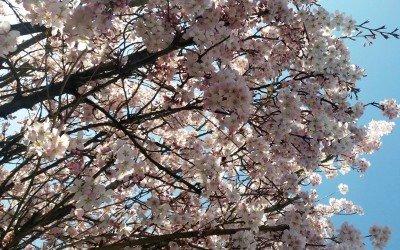 Achtung: Frühling!