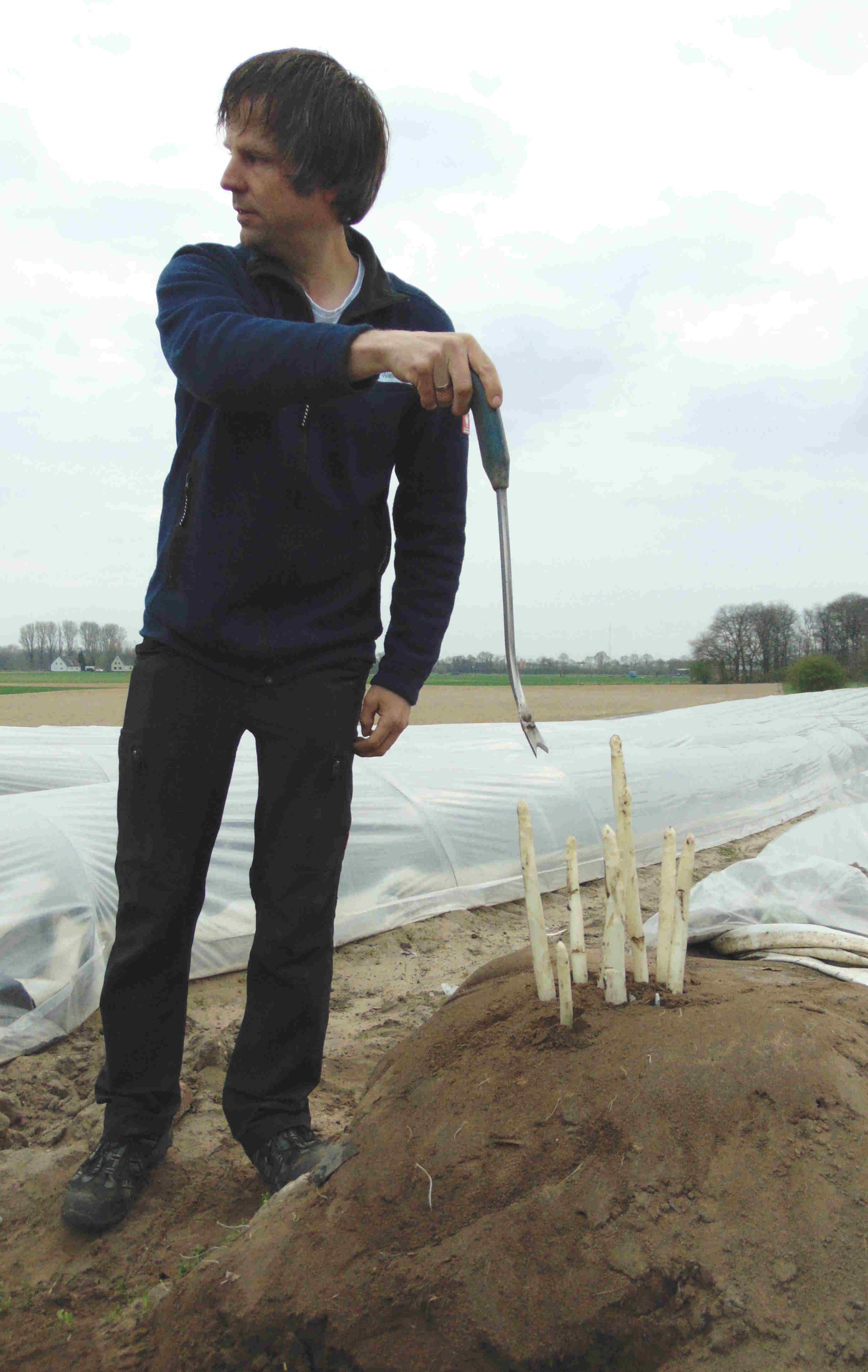 Ralf zeigt den Teilnehmern, wie sie einen Spargel stechen, ohne die noch nicht sichtbaren Stangen zu zerstören