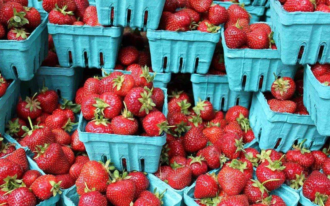 Erdbeeren und Strauchbeeren in Belgien 2016 – ein Überblick