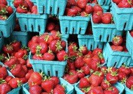 Erdbeersaison kommt in Schwung