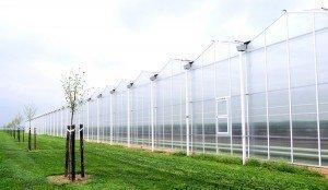 Glashäuser auf dem Hof Hensen
