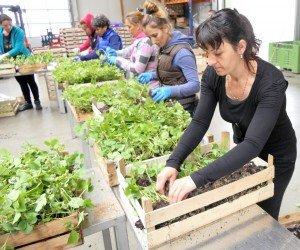 Traypflanzenvorbereitung