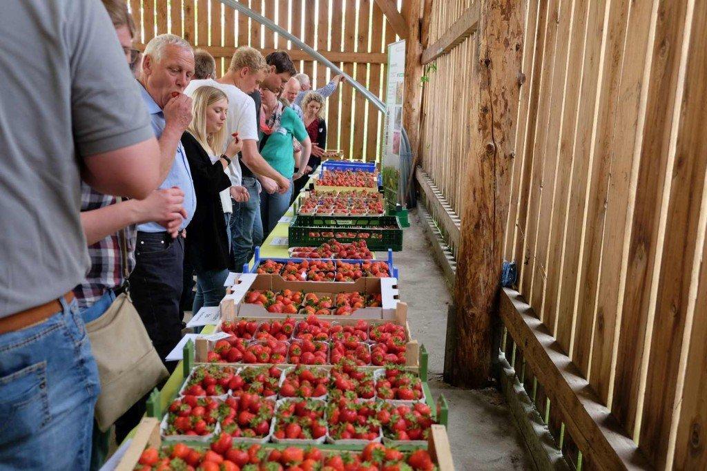 Erdbeerverkostung