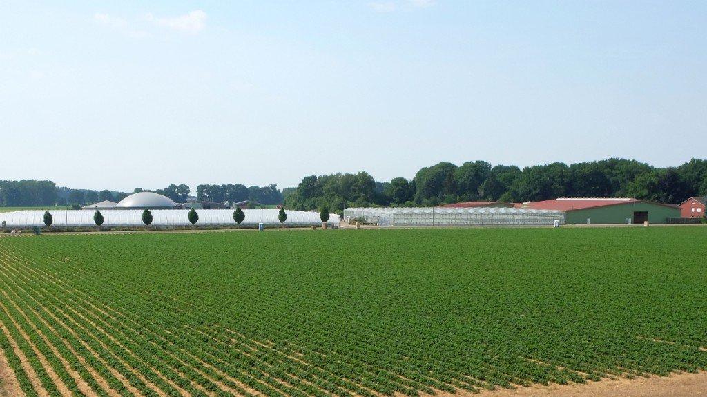 Auch auf diesem Feld soll die interaspa praxis stattfinden: Erdbeerfeld am Hof Osterloh     Foto: Heike Sommerkamp