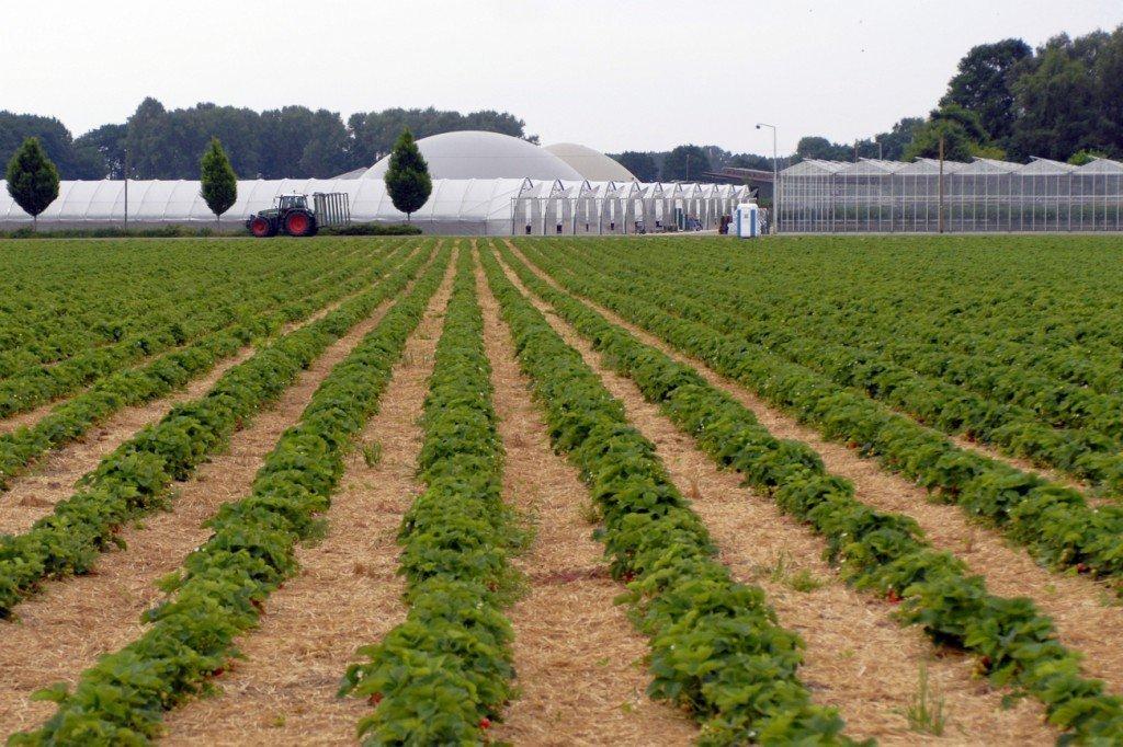 Erdbeerfeld - auch hier wird Messegelände sein.