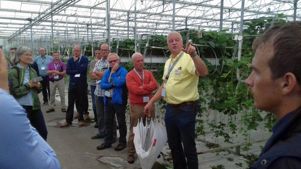 Willem van Eldik führt durch die Gewächshäuser der Verkuijlen-Erdbeervermehrung