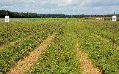 Ergebnisse des Soilsteam-Dämpfversuches – eine Zusammenfassung