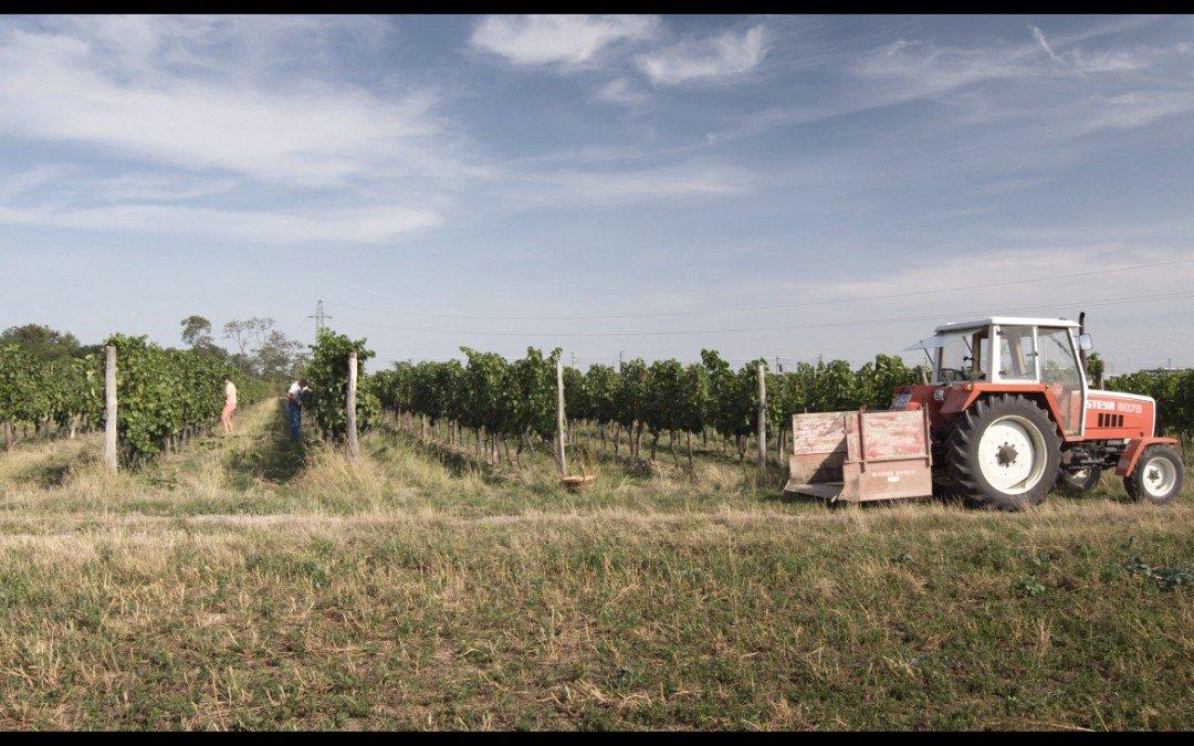 """""""So kann es nicht weitergehen"""" – Hoch gelobter Dokumentarfilm über die Zustände der Landwirtschaft"""