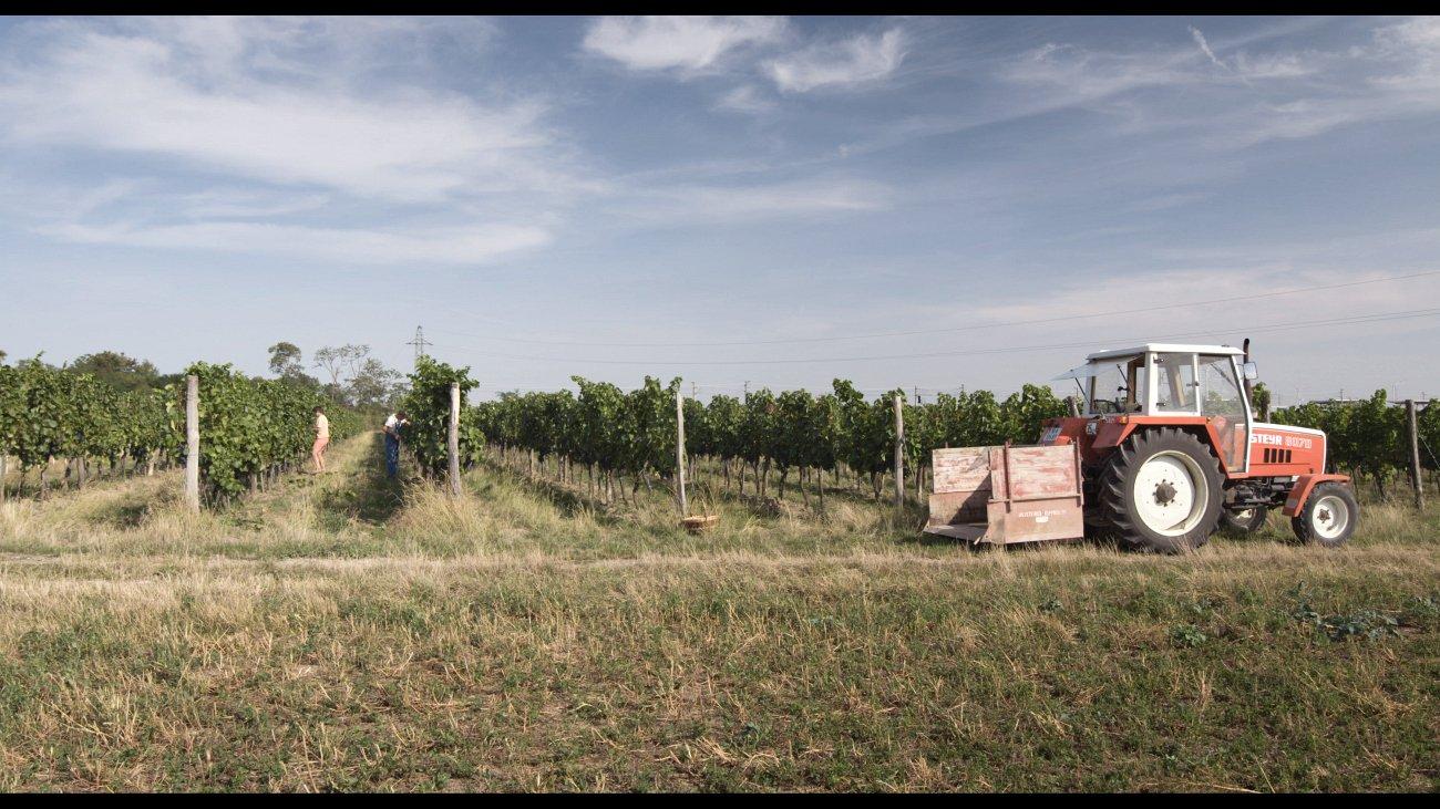 Weinbau Maria Vogt. Foto: Allegro Film 2016
