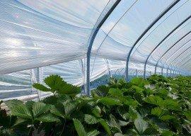 Licht für optimales Pflanzenwachstum – aber wie?