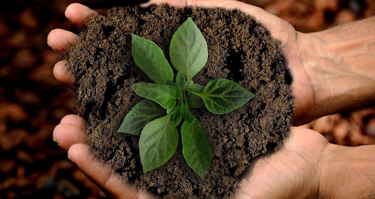 Nachhaltigkeit. Beispielbild
