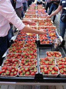 Erdbeersortenverkostung. Foto: Tanja Dolic
