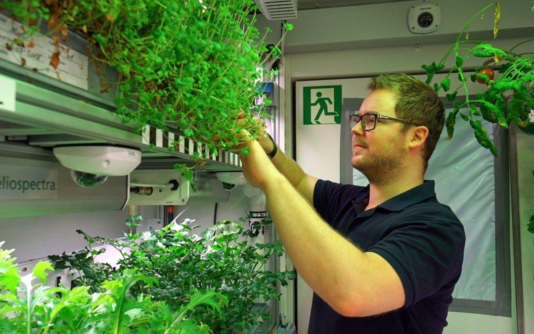 """DLR findet Erdbeeranbau in der Antarktis """"anspruchsvoll"""""""