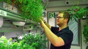 Paul Zabel bei den Erdbeerpflanzen.   Foto: EDEN-ISS