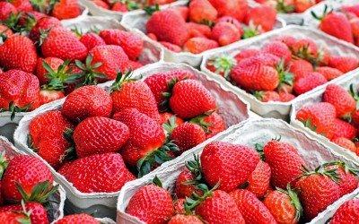 Kurze und heftige Ernte: Viele Erdbeeren in kurzer Zeit, schnell fallende Preise