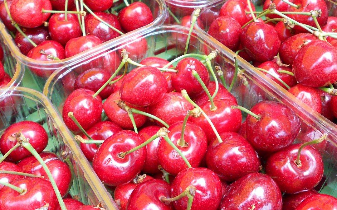 PM: In Niedersachsen beginnt das große Kirschenpflücken