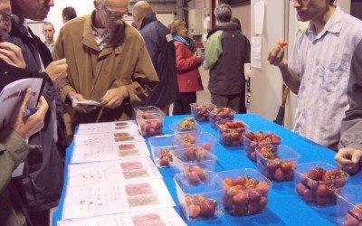 Erdbeersortentest zum 75. Jubiläum der Obstforschung bei PCfruit