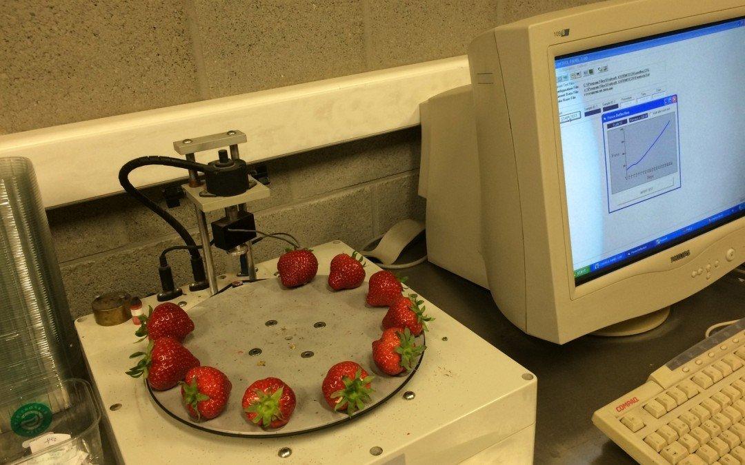 Studie zu Kaliumdünger bei Erdbeeren