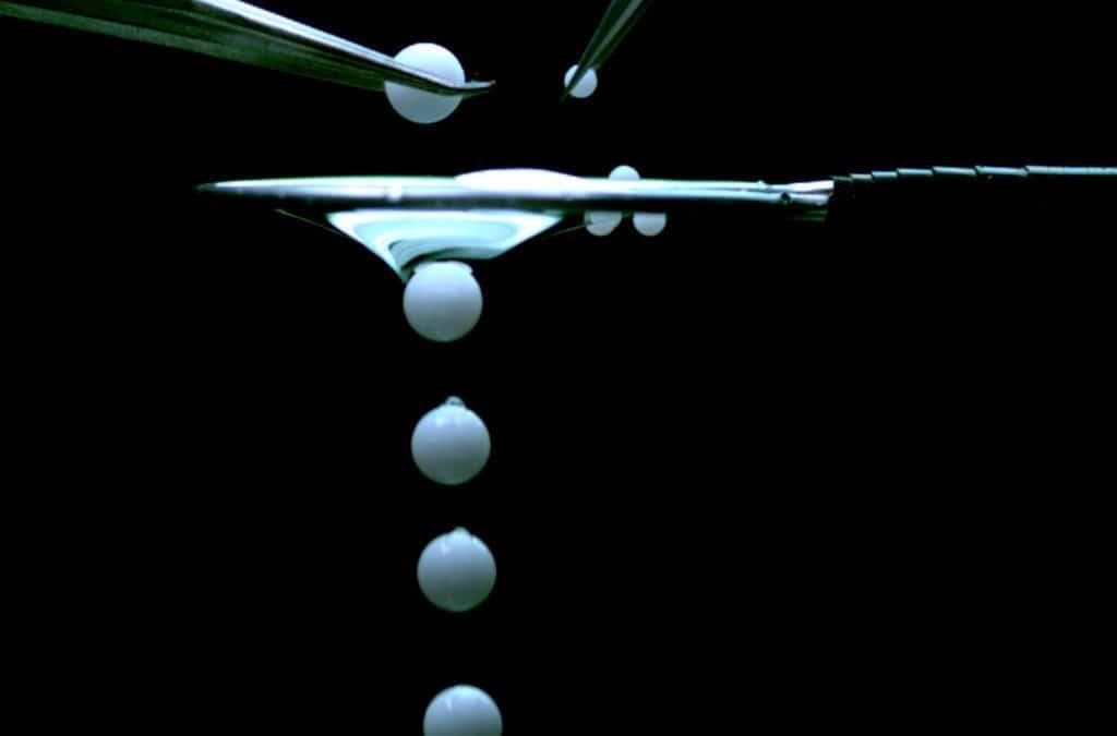 Mit Flüssigmembranen gegen die Kirschessigfliege