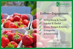 Bild Kuegro.de Erdbeeren 5.jpg