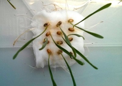 Neuentwicklung: Ungiftiges Insekten-Spray zum Pflanzenschutz