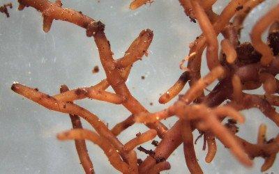 Mikroben als Lebenselixier