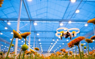 Micro-Drohnen zur Schädlingsbekämpfung