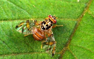Neue Schädlinge durch Klimawandel?