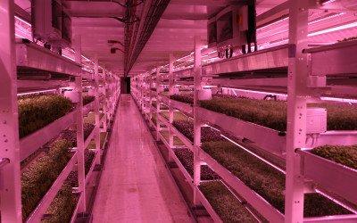 Farm im Untergrund