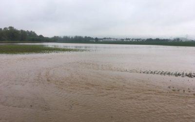 Rund 2.800 Hektar geschädigt durch Starkregen und Hagel
