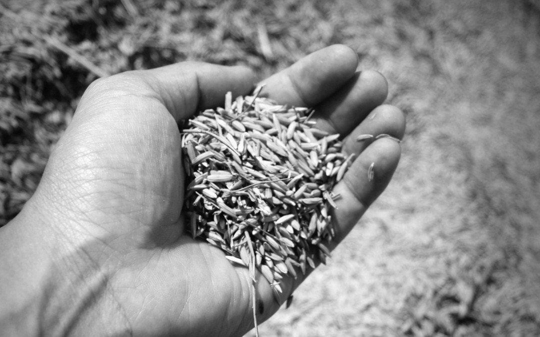 Warum betreiben wir Landwirtschaft?