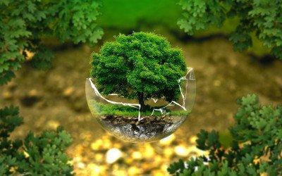 Ökologischer Landbau wächst