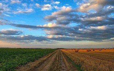 Stabile Ernte: Biologische vs. Konventionelle Landwirtschaft