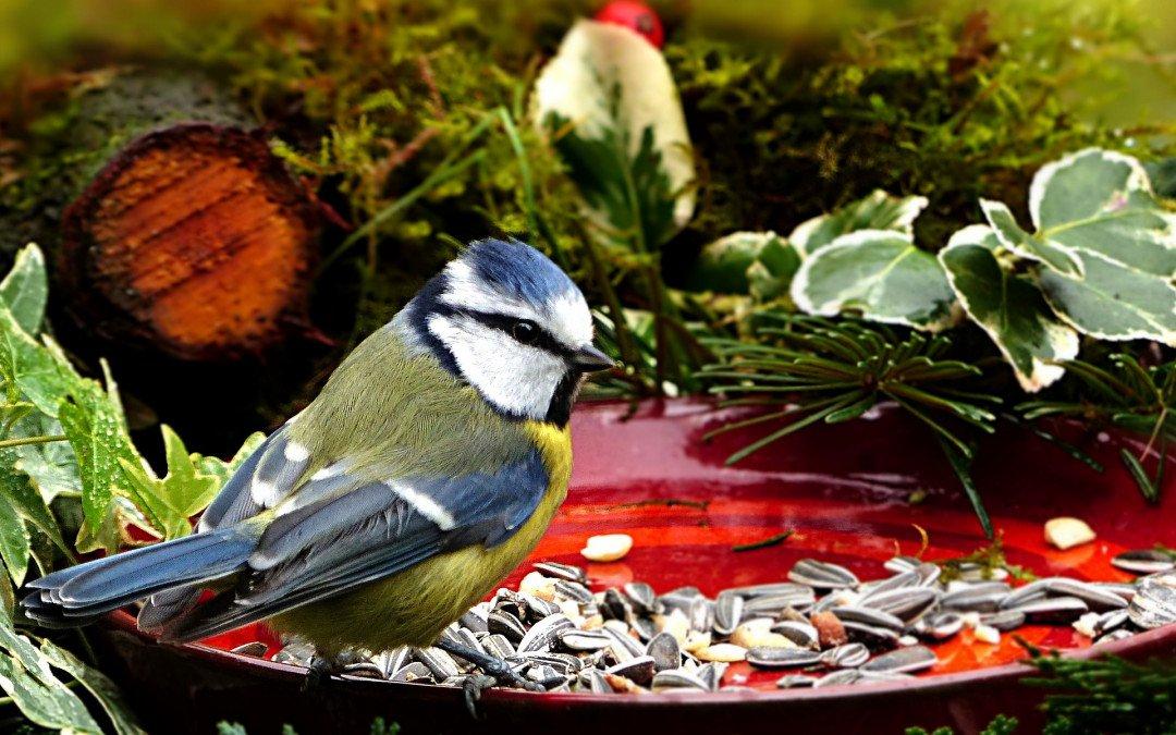 Vogelschutz leicht gemacht