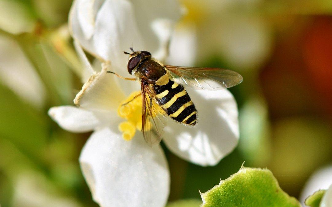 Aktionsprogramm Insektenschutz