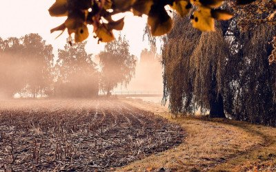 WWF-Studie zum nachhaltigen Ackerbau erschienen