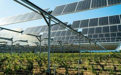 Pflanzen unterm Solardach