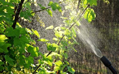 Absatz an Pflanzenschutzmitteln geht zurück