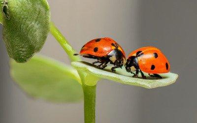 Gegenwind für das Aktionsprogramm Insektenschutz der Bundesregierung