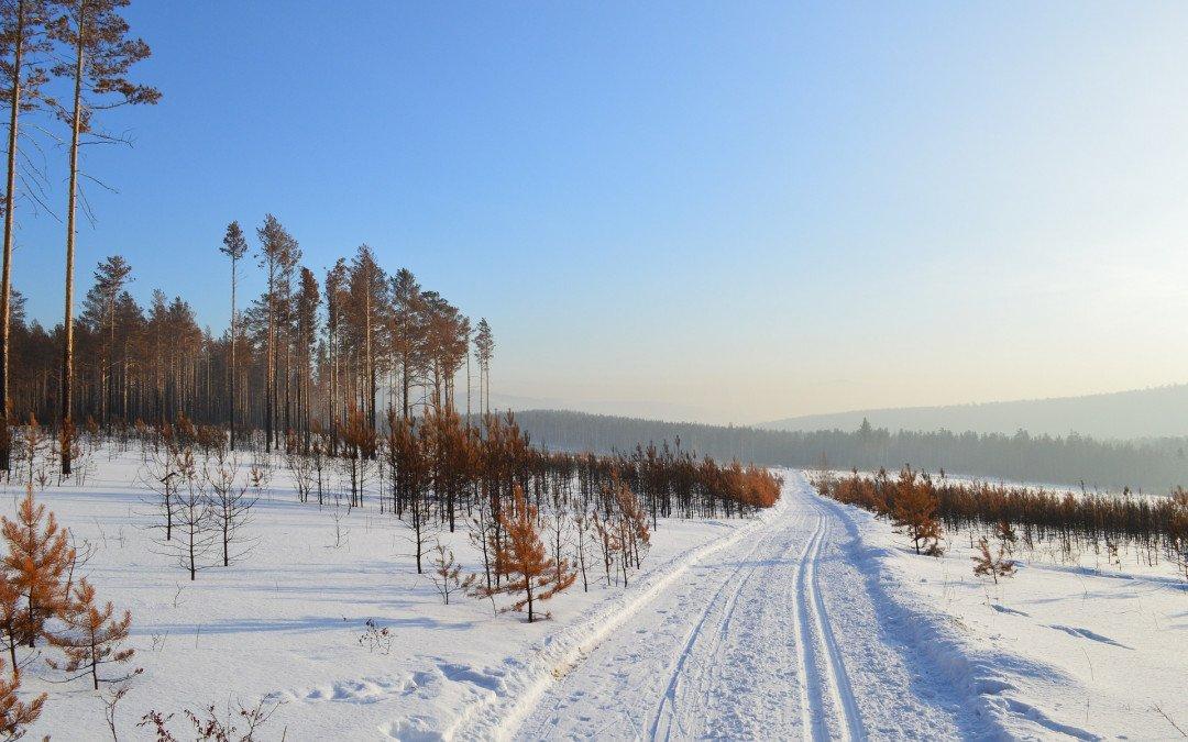 Mais aus Sibirien