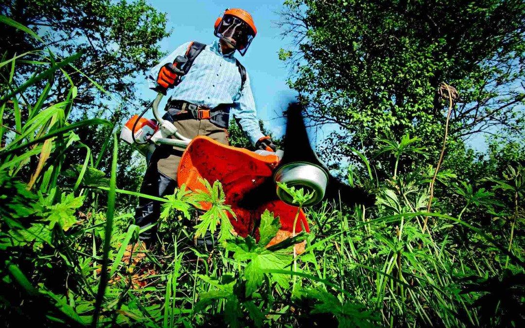 Der Gartenbauberuf bleibt beliebt