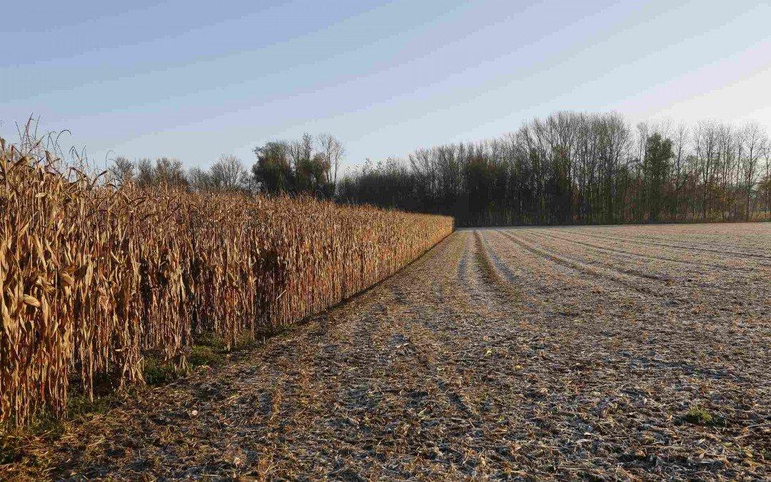 Agribusiness im Jahr 2035