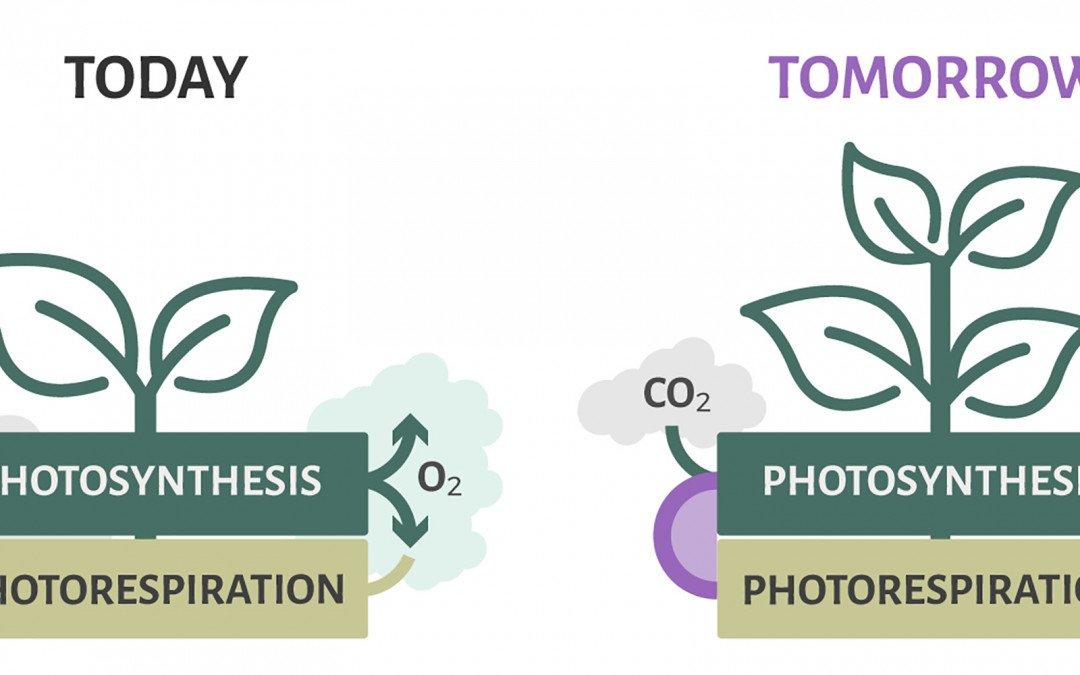 Verbesserung von Ernteerträgen durch Photorespiration