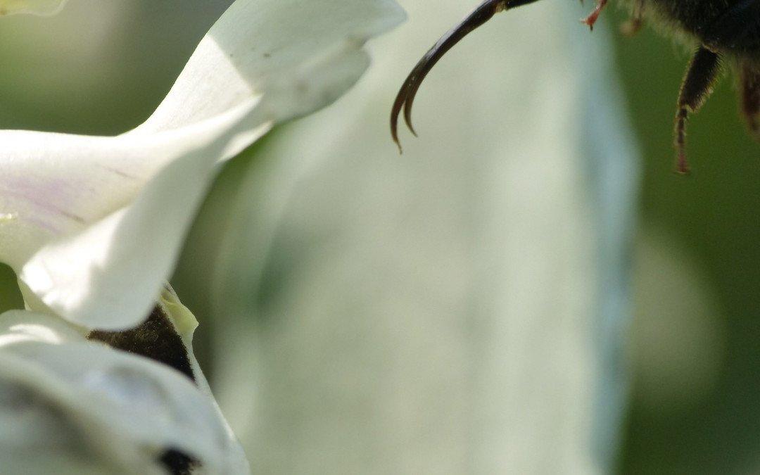 Ambiente und gutes Essen: Wildbienen brauchen vielfältige Agrarlandschaften