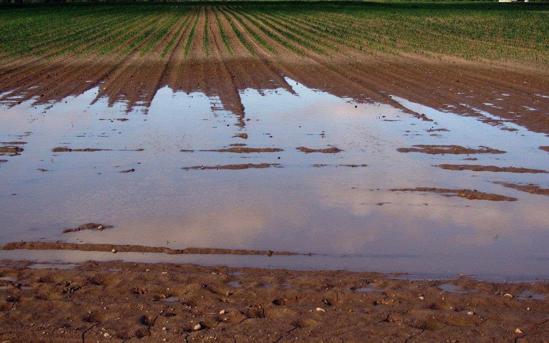 Unterstützung für die von der Flut betroffenen Landwirte