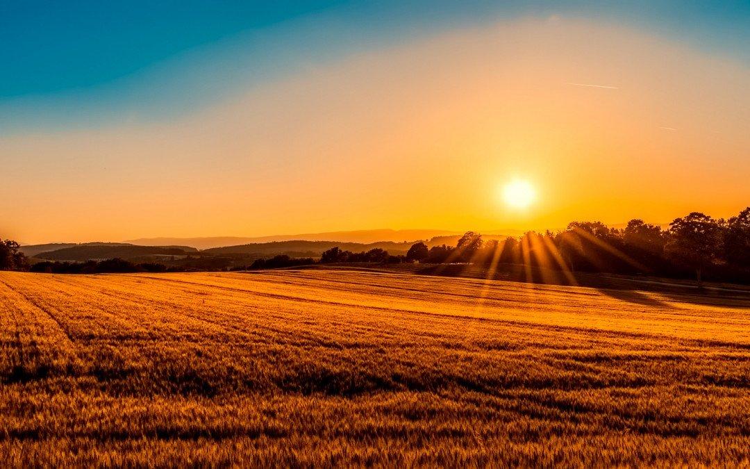 Wem gehört die Landwirtschaft?