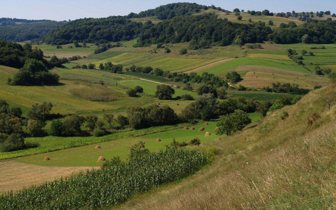 Alternativen: Biodiversitätsfreundliche Landschaften jenseits des Öko-Landbaus fördern